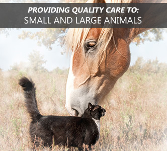 Providing quality care to small and large animals