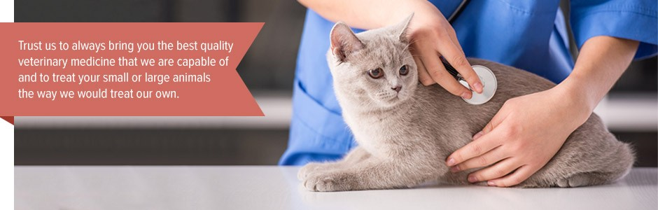 Trust us to always bring you the best quality veterinary medicine that we are capable of and to treat your small or large animals the way we would treat our own.